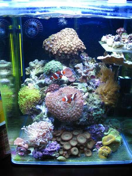 Nano marins vous y croyez for Poisson aquarium 30l