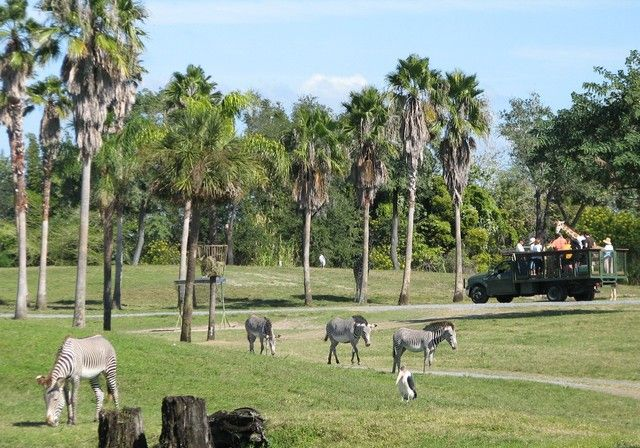 Busch Gardens Tampa Pictures Micechat